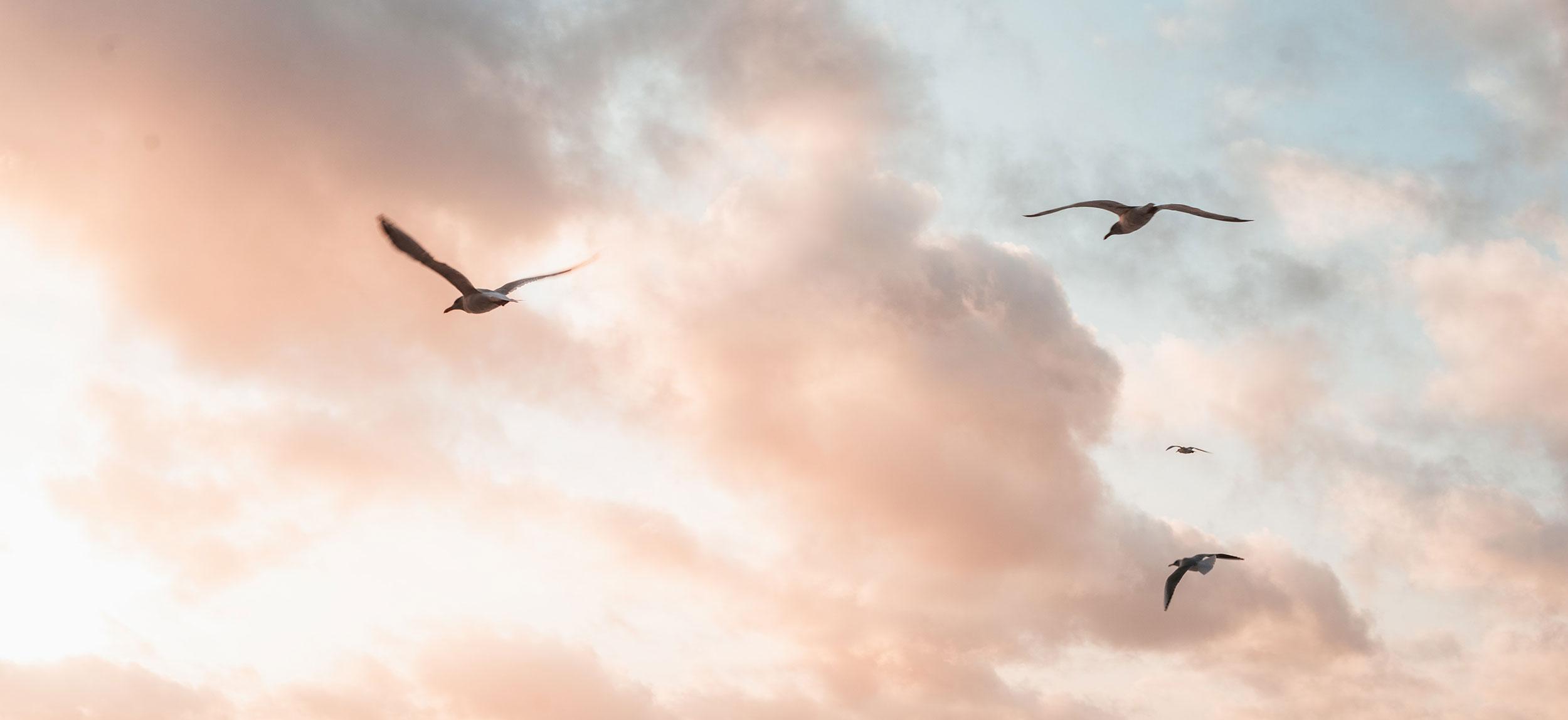 ouvrir ses ailes - liberté